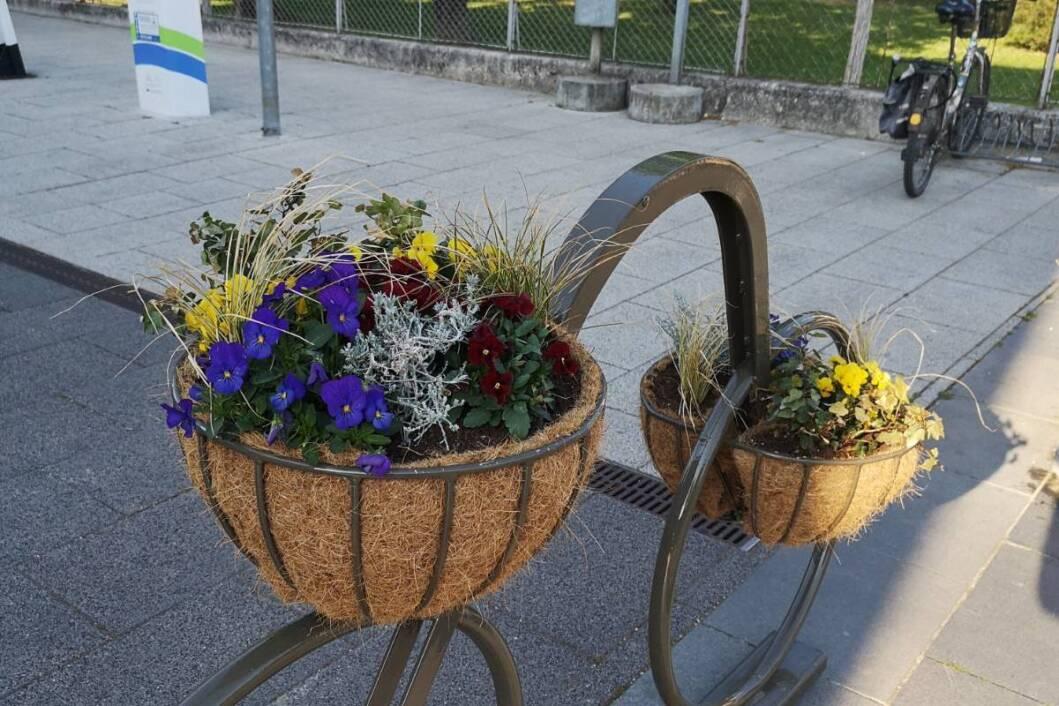Cvijeće oko gradske vijećnice