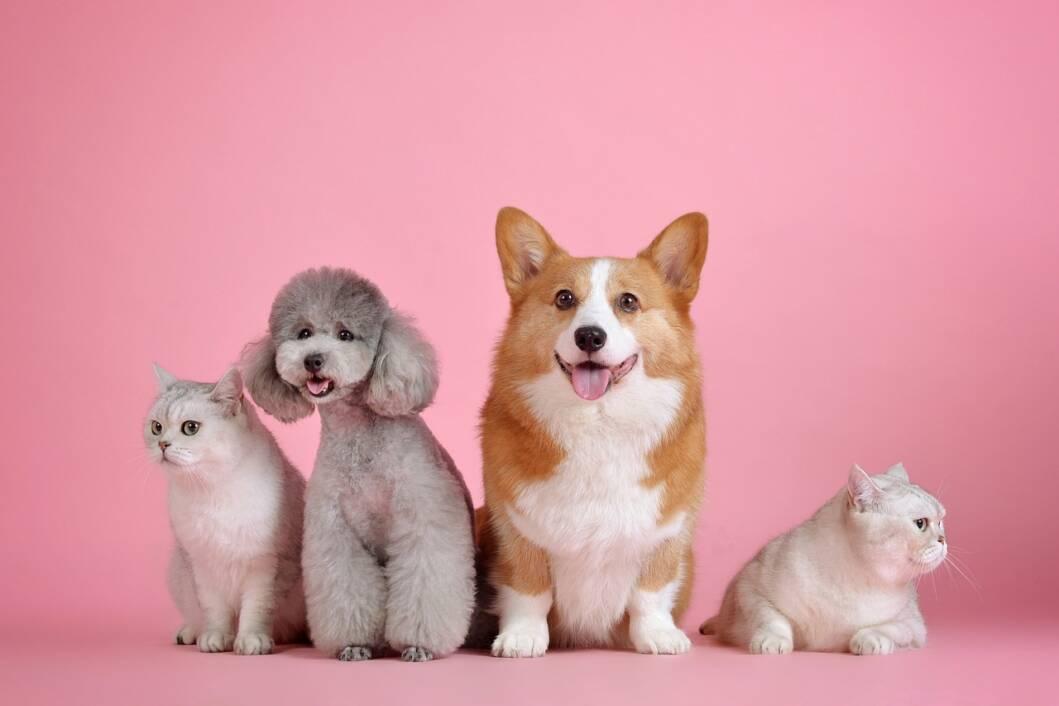 Psi i mačke najčešći su kućni ljubimci