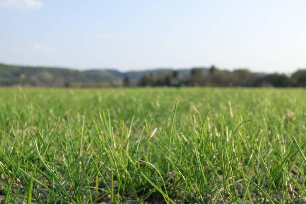 Raste trava zelena
