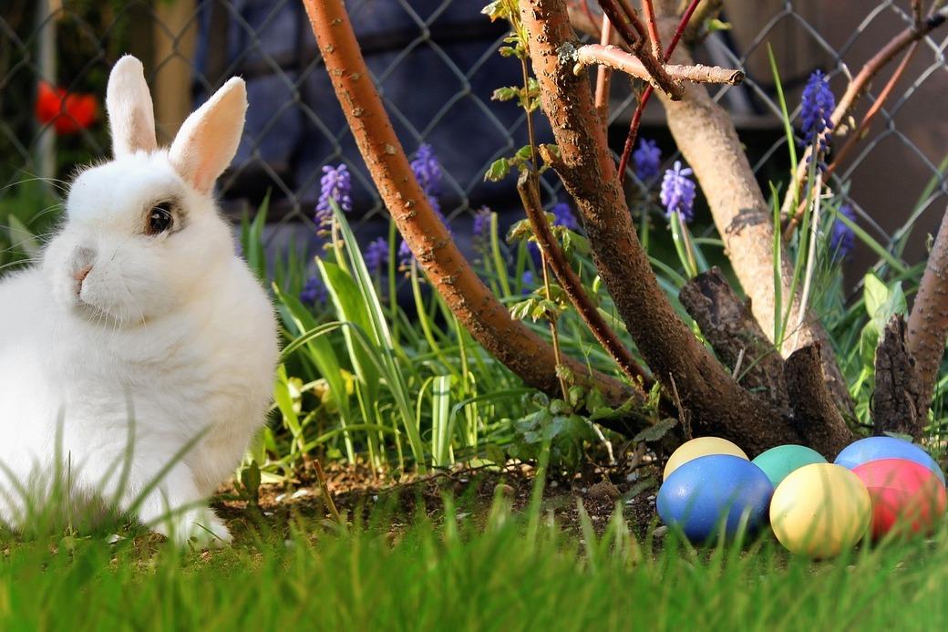 Uskrsni zeko i uskrsna jaja
