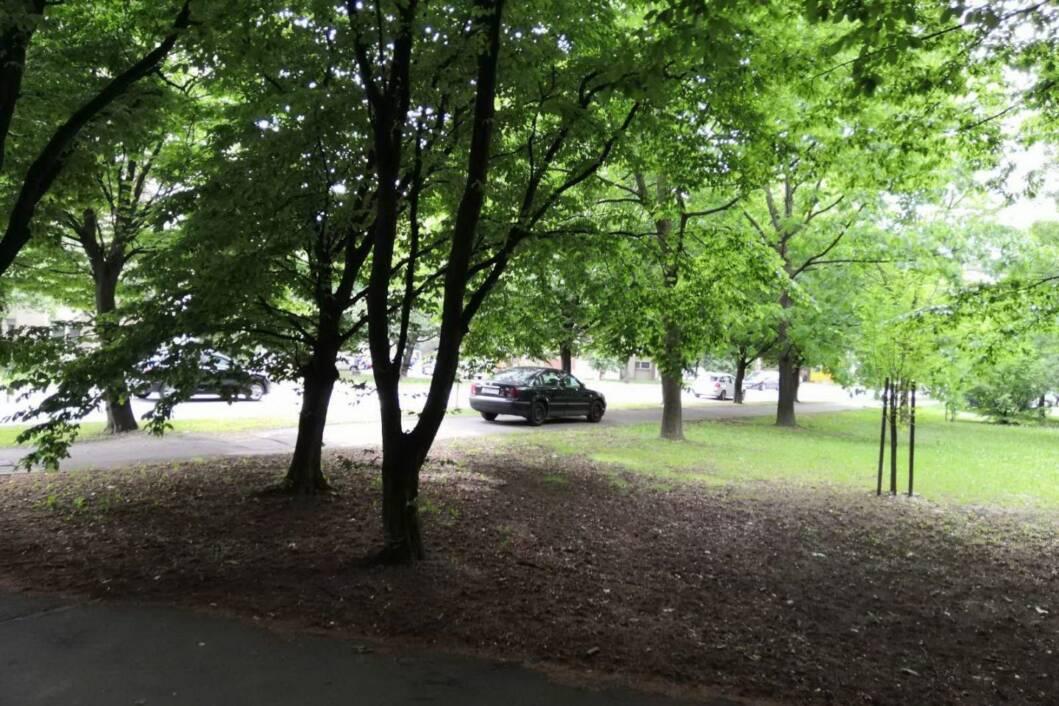 Vožnja automobila po parku