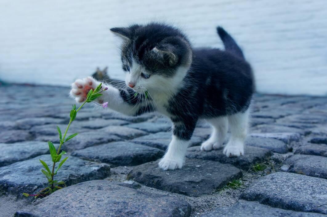 Mali mačak