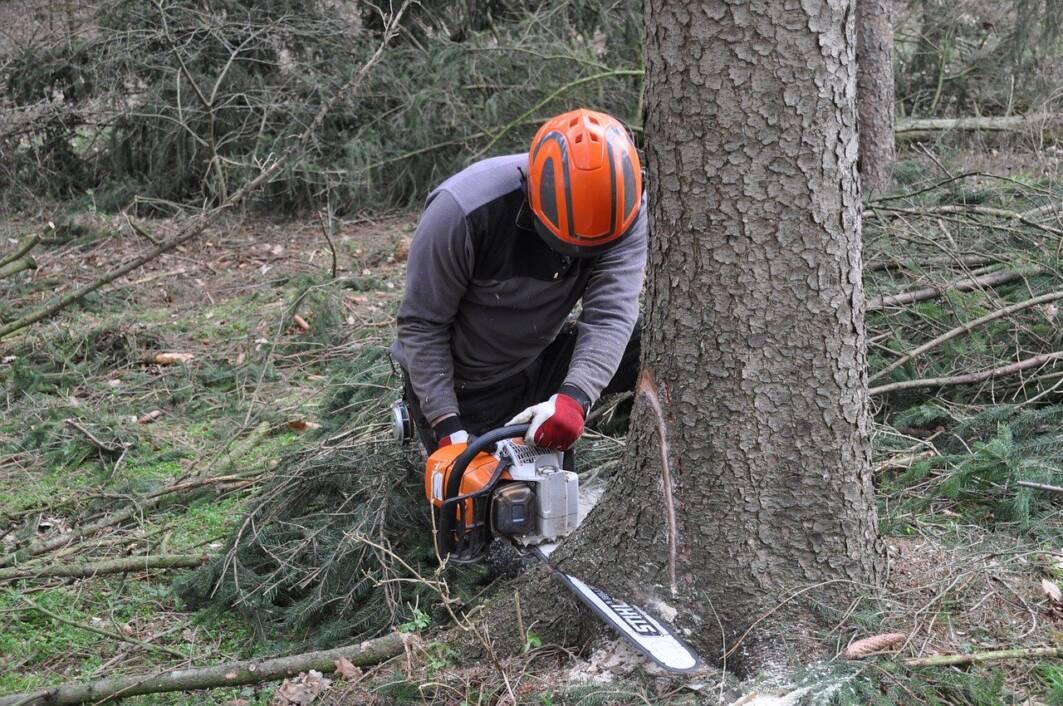 Radnik u šumi ruši drva