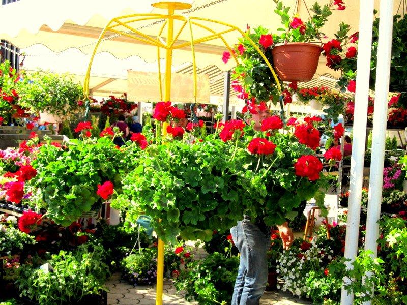 Sajam cvijeća u Ludbregu
