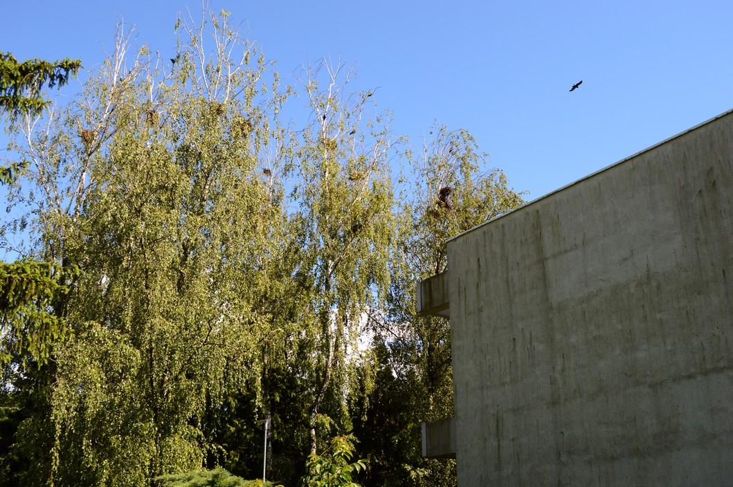 Vrane kaj koprivničkog srednjoškolskog centra