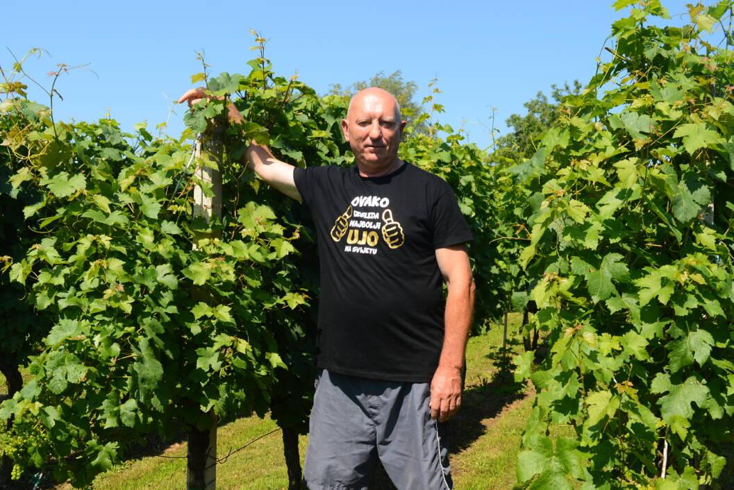 Ivan Vedriš u vinogradu