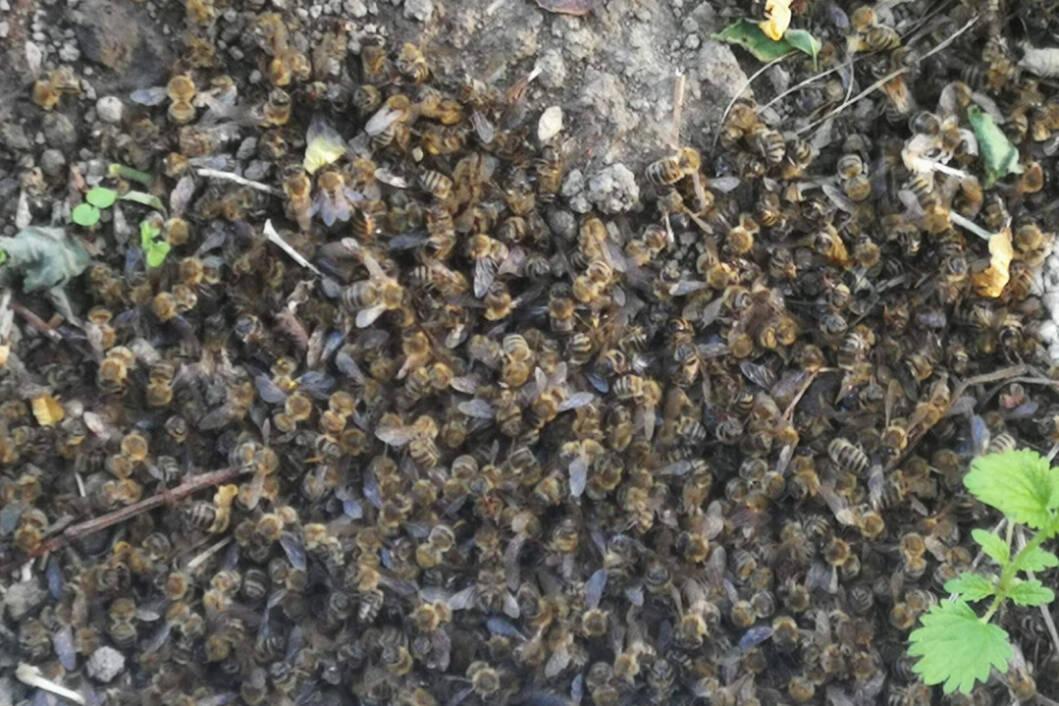 Pomor pčela na području Međimurske županije