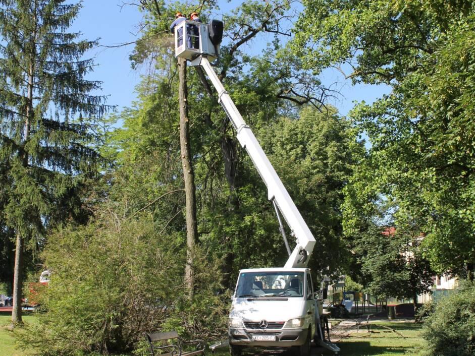 Rušenje osušenih stabla u koprivničkom parku