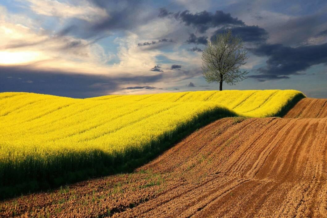 Proljeće, fotografija Željka Cara