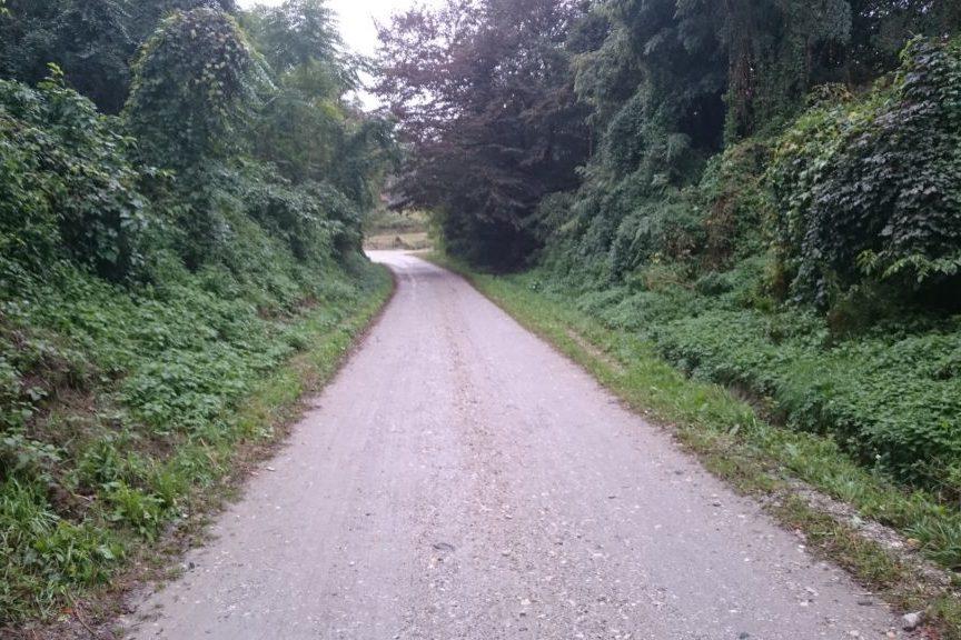 Šumska cesta na području Đurđevca