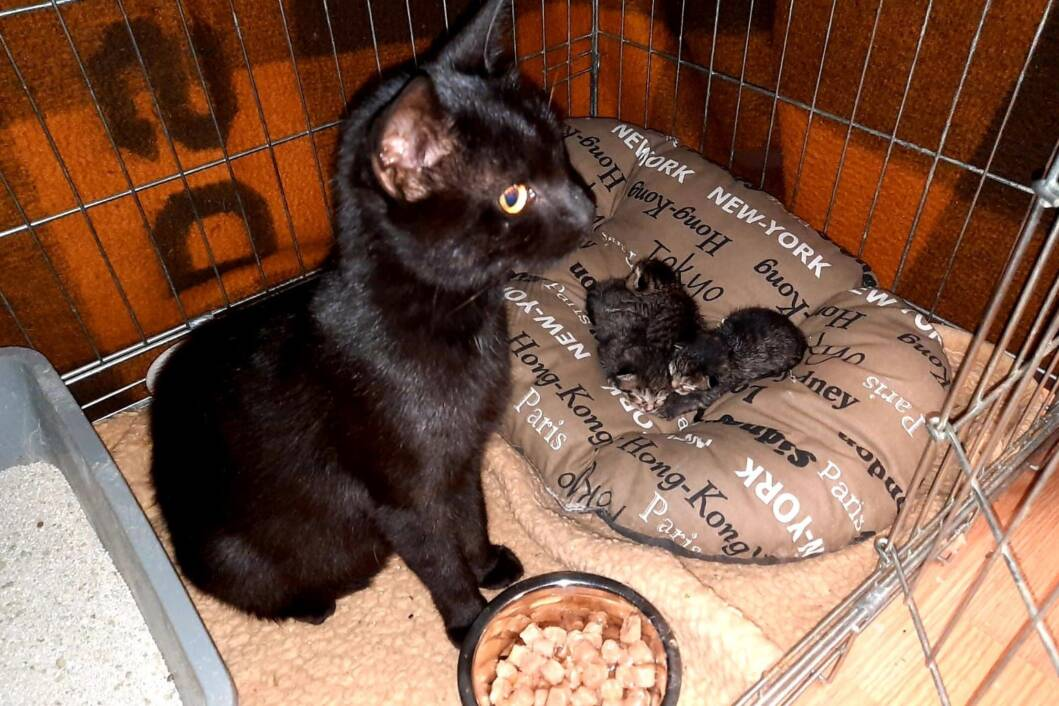 Mačka i tri mačića