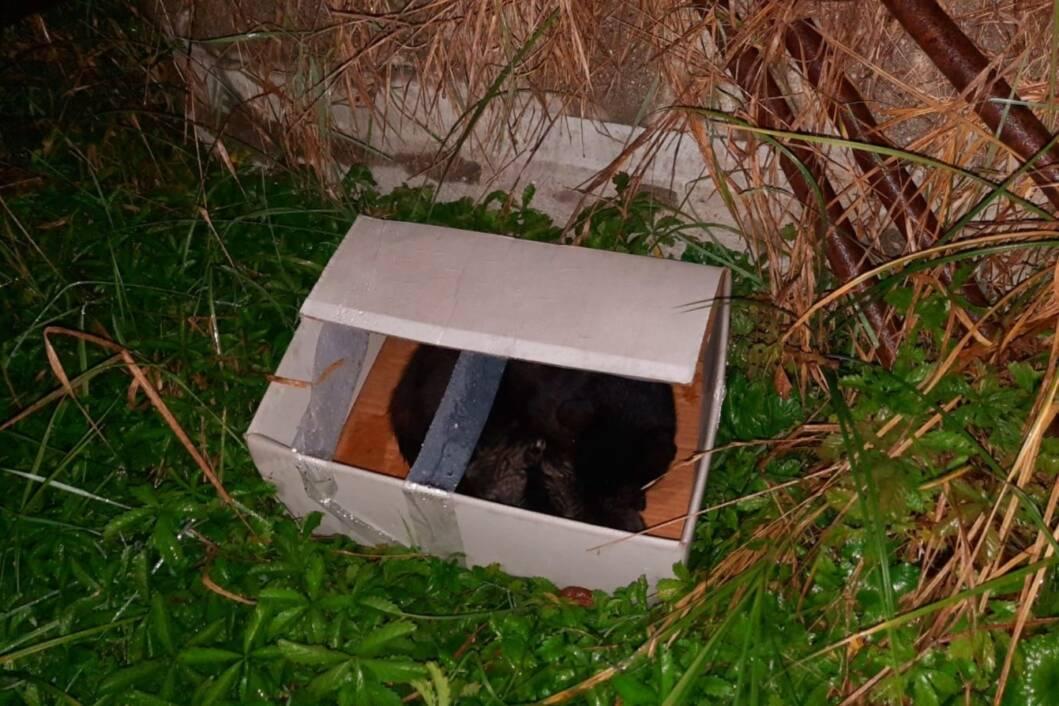 Mačka i tri mačića izbačeni u bijeloj kutiji