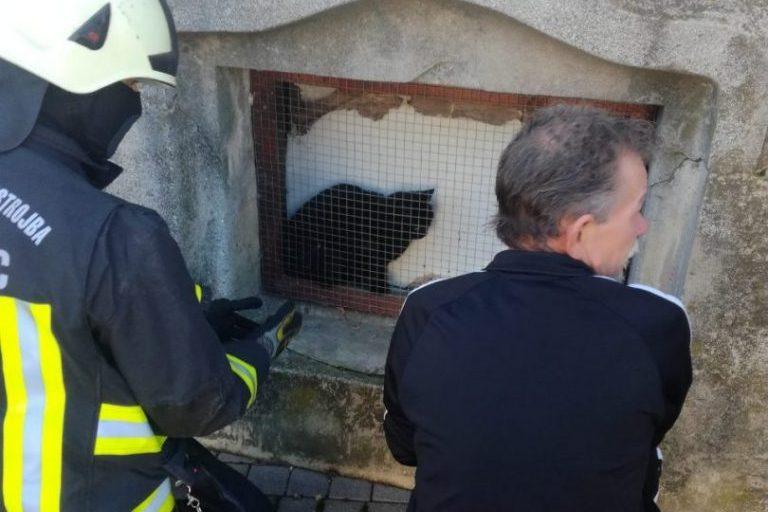 Maca iza mrežice prije akcije spašavanja