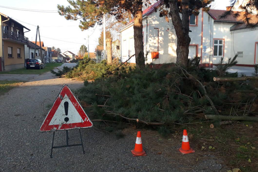 U ulici Ivana Viteza Trnskog u Novigradu Podravskom uklonjena opasna stabla