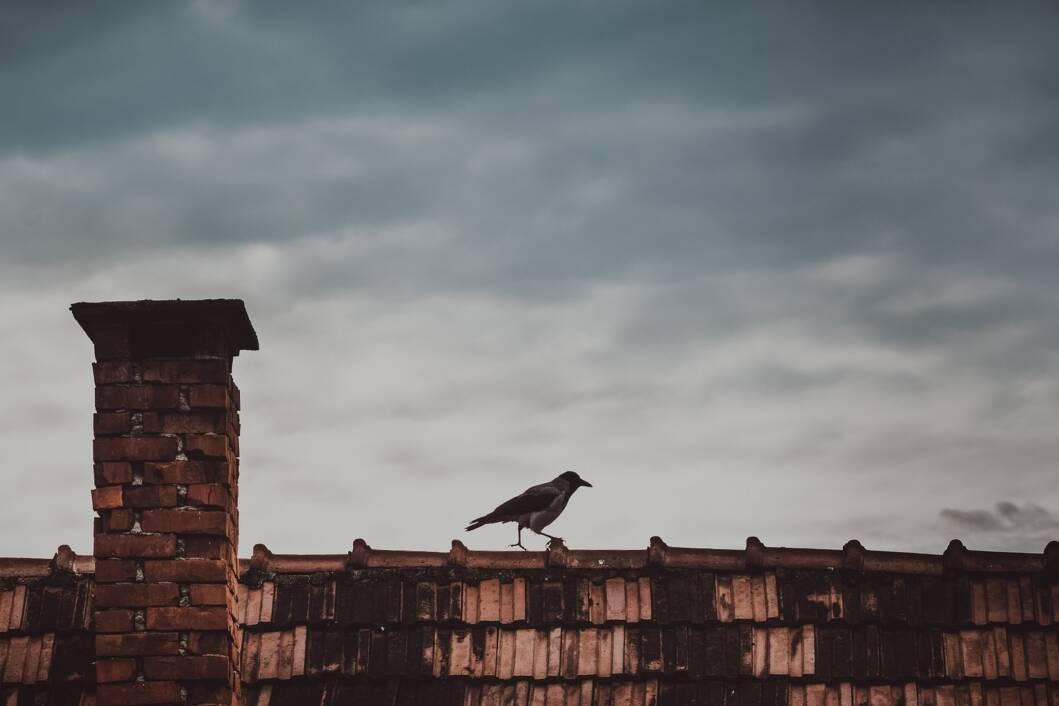 Vrana sjedi na krovu stare kuće