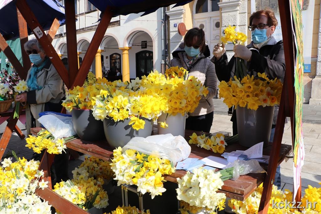 Dan narcisa na koprivničkom Zrinskom trgu
