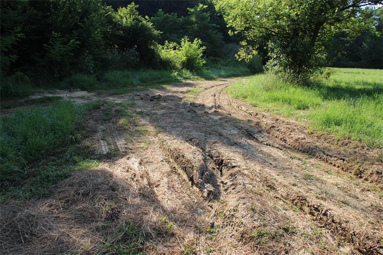 Šuma nedaleko Malog Mihaljevca